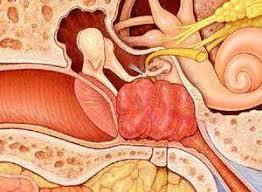 گلوموس بیماری گوش میانی